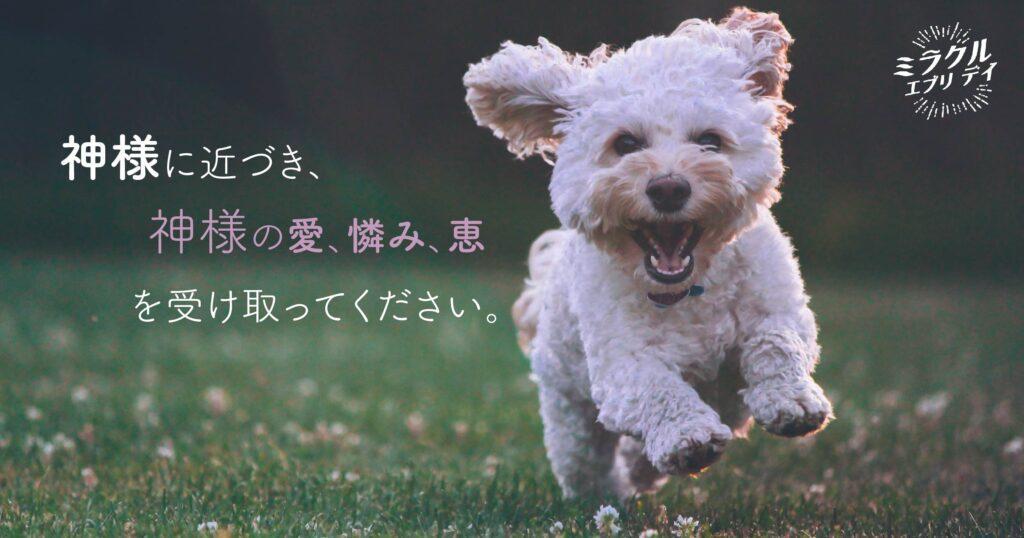 AMED_image_7.8