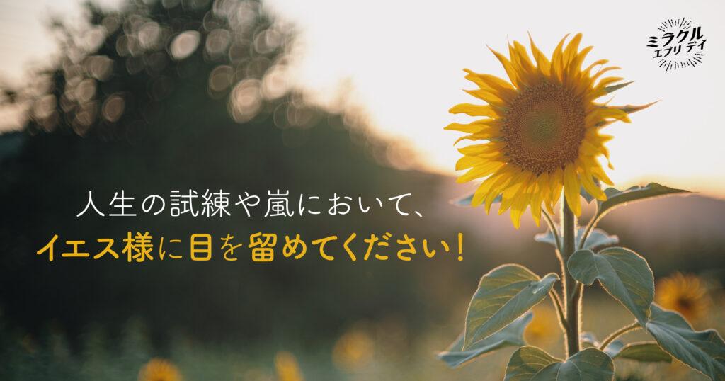 AMED_image_21.1